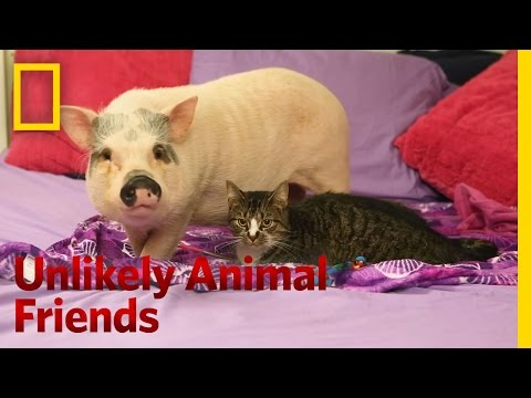 Kitty Gets a Piggyback Ride | Unlikely Animal Friends