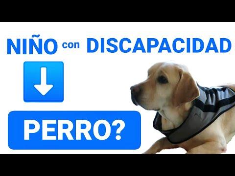 Un niño con discapacidad necesita un perro? 🐕🦺🤷♂️