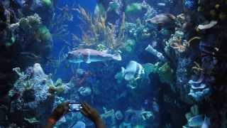 Chicago Shedd Aquarium - Wild Reef