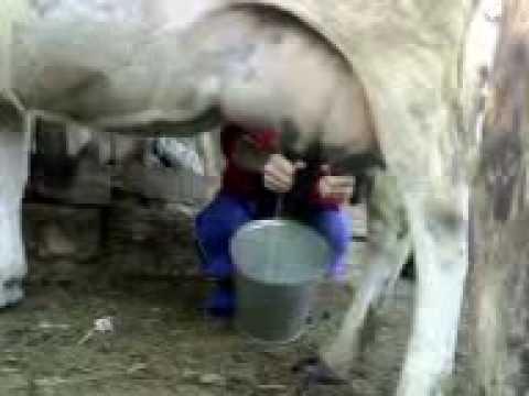 Убаб доят молоко фото 418-672