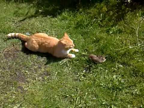 fanger katte rotter