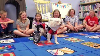 Blind Dog in Wheelchair Teaches Kids Ab...