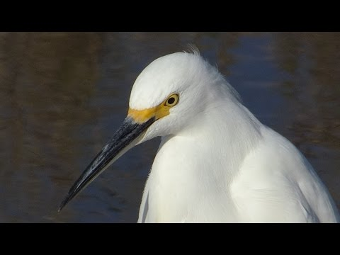 Sacramento & Colusa  National Wildlife Refuge Tour 2016-11-05