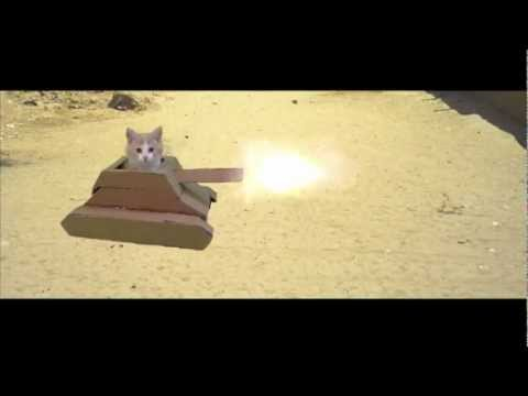 Kucing Tank Kerdus