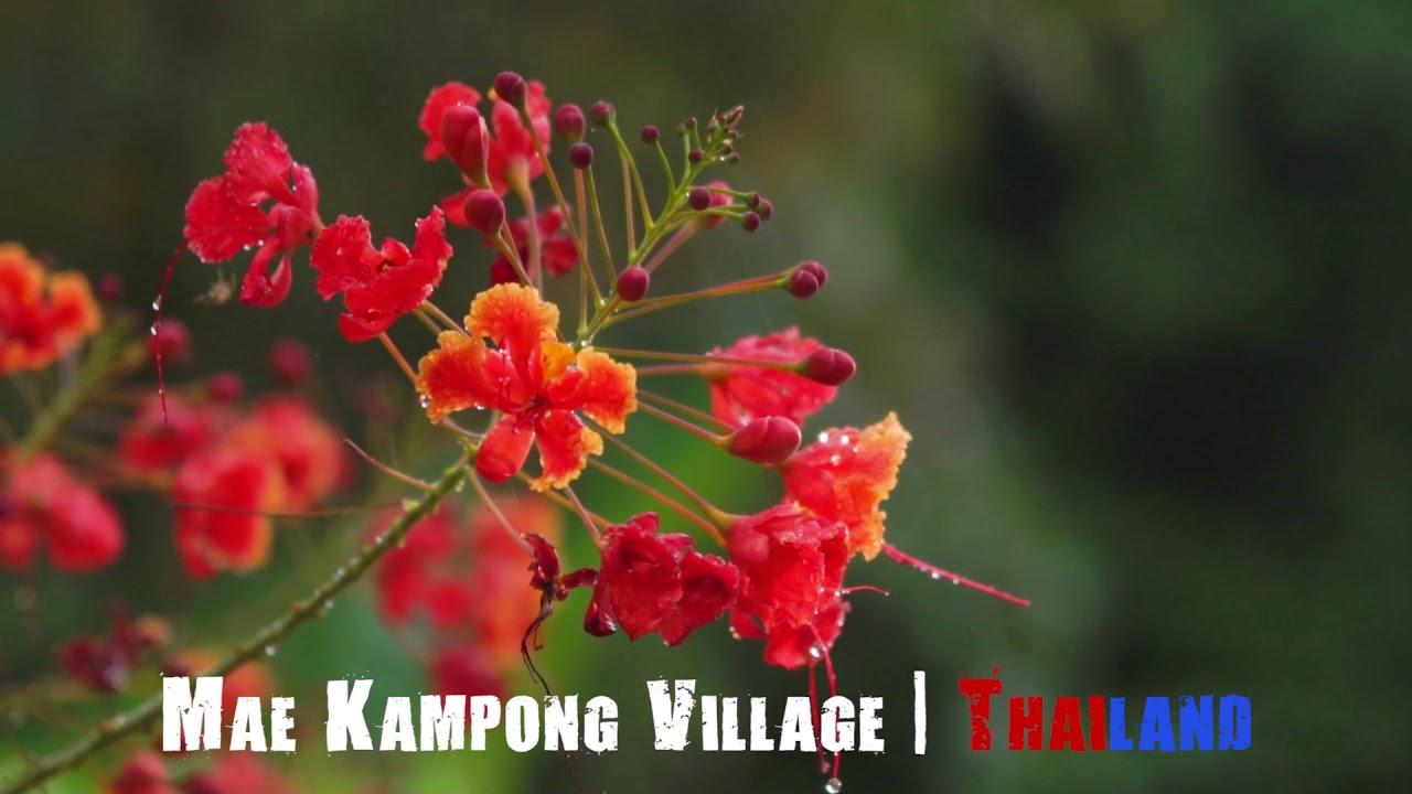 Đi Thái Lan nhớ ở homestay Mae Kampong –  Chiang Mai