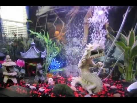 My 20 gallon fish tank youtube my 20 gallon tiger barb for 20 gallon fish tank decoration ideas