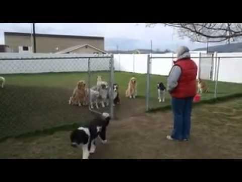 Anjing absen
