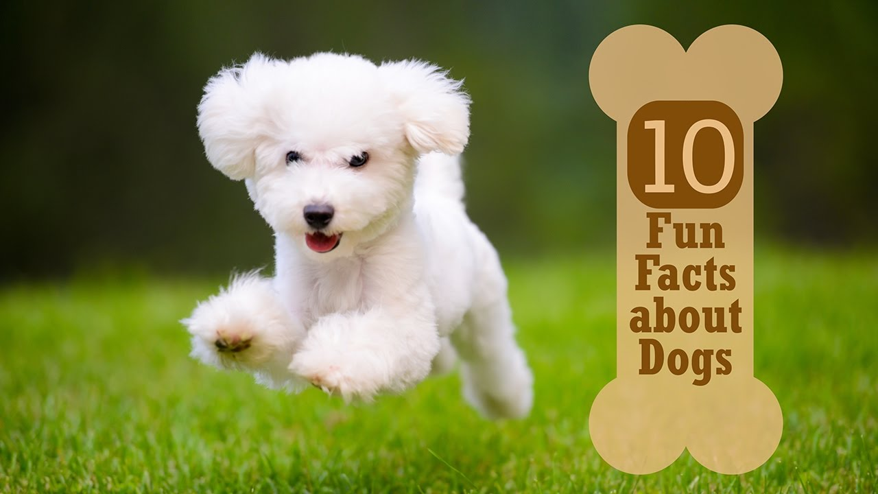 100 Fun Facts about Dogs | Fact Retriever.com