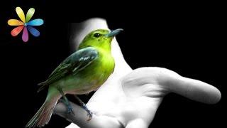 Приметы о птицах + русские субтитры – Все буде добре. Выпуск 684 от 08.10.15