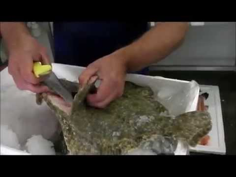 Fresh Wild Turbot Fish - How To Fillet Turbot