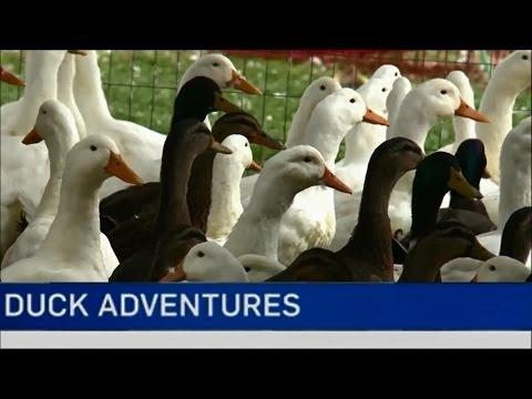 The Duck Adventure Featured On CTV News Ottawa
