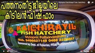 പത്തനംതിട്ട ജില്ലയിലെ കിടിലൻ ഫിഷ് ഫാം - Pathanamthitta Mylapra Kaichirayil Fish  Hatchery