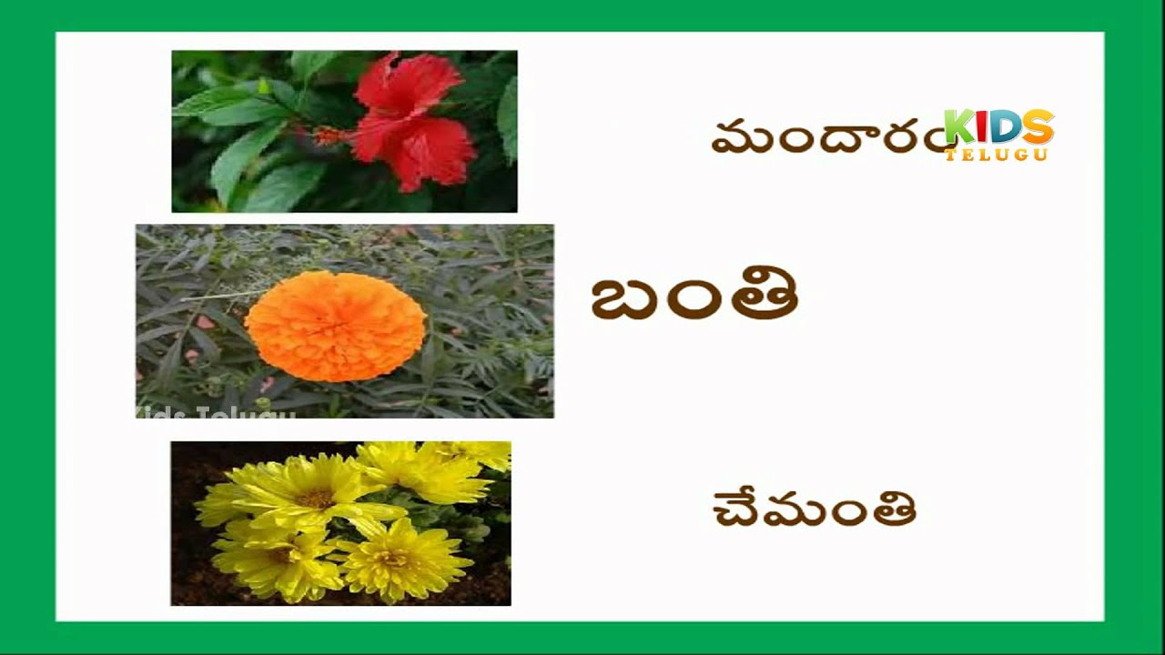 Learn Flowers Names With Pictures For Childrens In Telugu Telugu