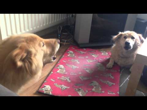 Cute dogs talking to each other