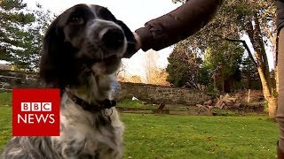 World first for dog's broken leg - BBC News