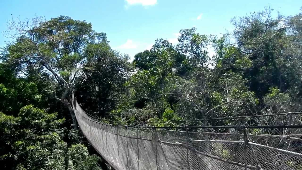 Peru Rainforest canopy bridge & Peru: Rainforest canopy bridge - YouTube