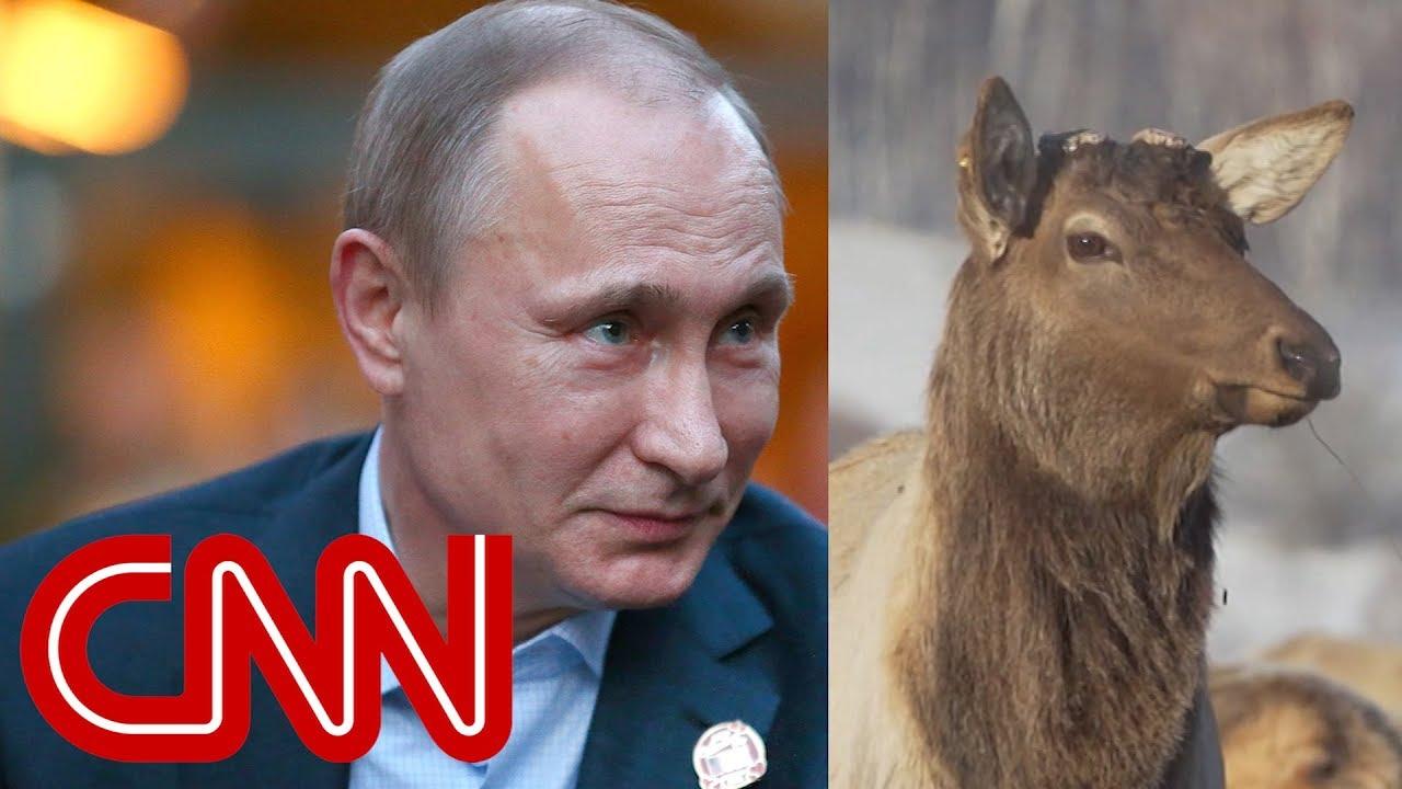 Putin and 'magic' deer antler blood - Dauer: 117 Sekunden