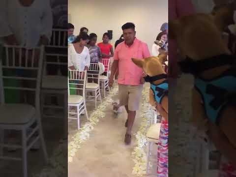 Celebran 'boda' de perros en hotel en Vallarta