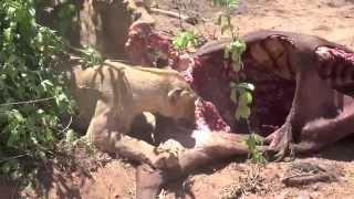 Selous Game Reserve, Ruaha & Mikumi National Park, Tanzania