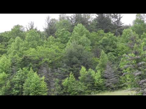 Living in the Blue Ridge Mountains of Appalachia - Part 1 - Little Switzerland