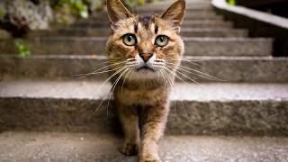 Прикол про котов. Смешные проделки домашних животных