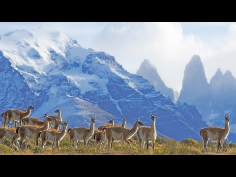 Across Patagonia: Chile's Lakes, Mountains & Wildlife