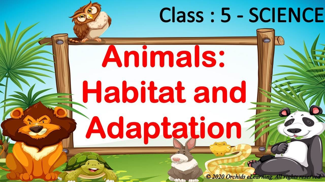 Animals : Habitat and Adaptation - Class : 5 Science    Exercises \u0026  Question Answers   CBSE / NCERT - YouTube [ 720 x 1280 Pixel ]