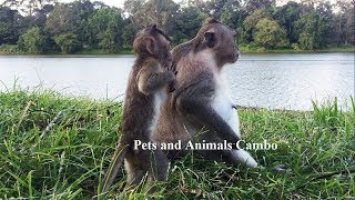 Pets and Animals Cambo : Look !! What is that mommy ? It's so amazing , PAC 390