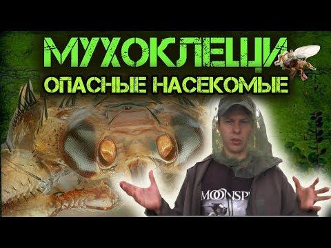 ☣ Лосиная муха (вша, блоха)атакует в лесу  ☸Оленья кровососка.Осторожно!