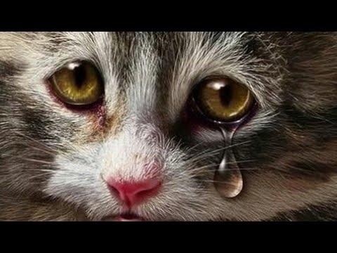Бедный котёнок Кот