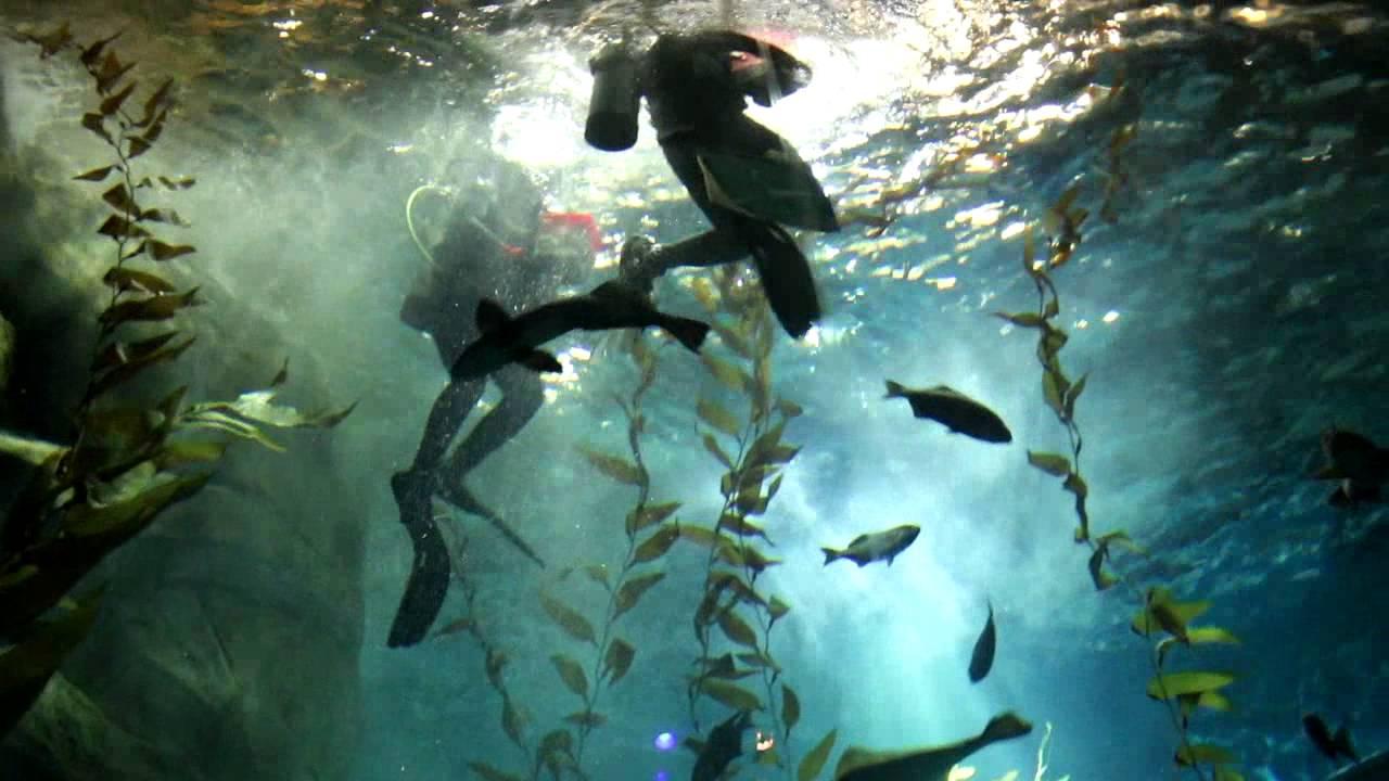 Ripley's Aquarium - Swimming with Sharks, Petting Sting ...
