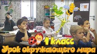 В мире насекомых. Урок окружающего мира в 1 классе. Частная школа «Взмах-север», Санкт-Петербург