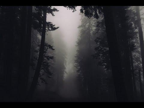 36 Chilling true stories for a long dark night | Reddit horror stories compilation #5