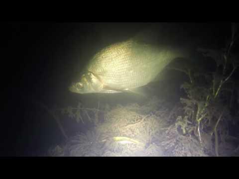Подводная охота - карась и щука