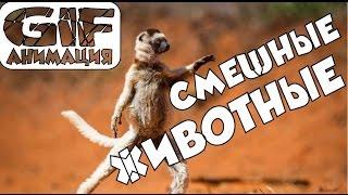 Смешные животные 3.GIF Анимация. ПОДБОРКА ВИДЕО ПРИКОЛОВ 2016 #  . ПРИКОЛЫ ВИДЕО