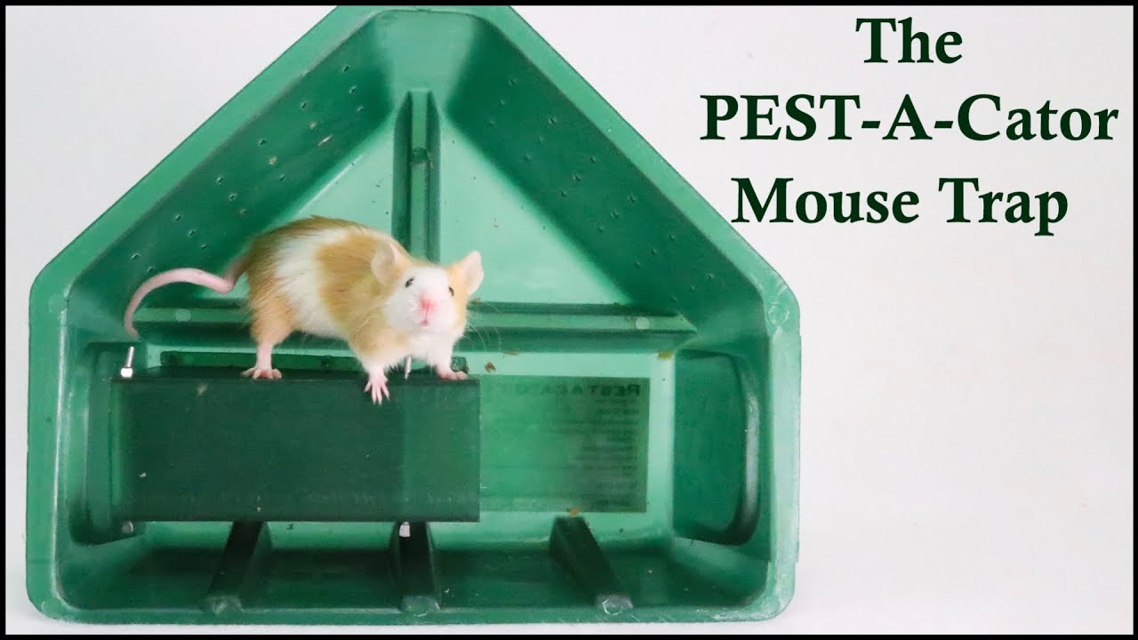 The PEST-A-CATOR Live Catch Mouse Trap. Major Fail -  Mousetrap Monday.