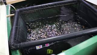 Koi Fry Unboxing - What i learned from last year