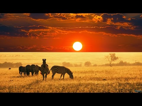 The Beauty of Africa | landscapes and wildlife