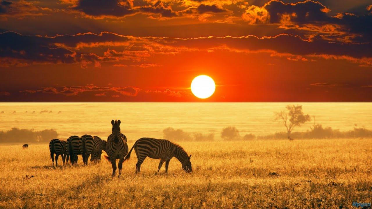 Beautiful Animals Safaris Safari Amazing Beautiful: Landscapes And Wildlife - YouTube