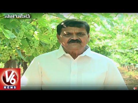 Success Story Of Organic Farmer Venkat Reddy | Keesara | Sagubadi | V6 News