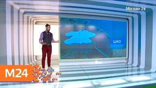 """""""Климат-контроль"""": в Москву пришла весенняя погода - Москва 24"""