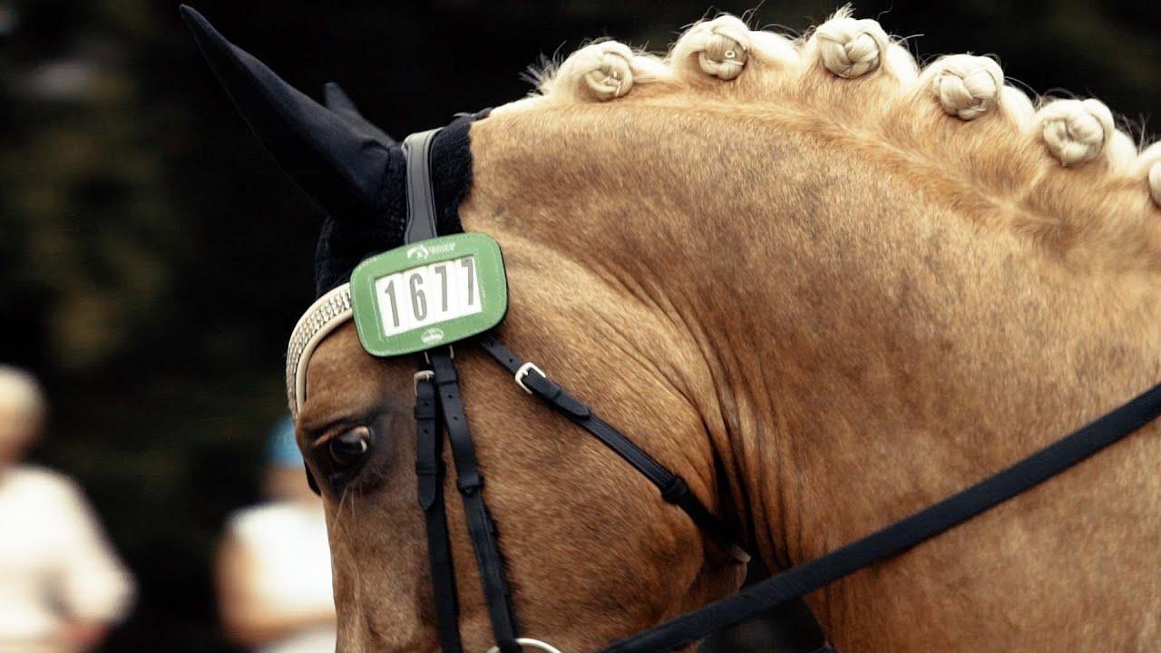 Sport Horse Films Australia | MEMENTO VIDEO | Glamour Rock BHI