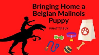 Getting a Belgian Malinois Puppy | What do I Need?