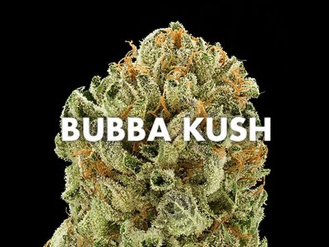 Bubba Kush Strain Review