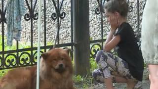 В Вологде раненую собаку собственные владельцы бросили прямо под окнами дома