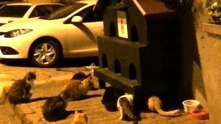 猫の集会をやっていると思ったら、猫ハウスの下で1匹の猫が追い詰められ...