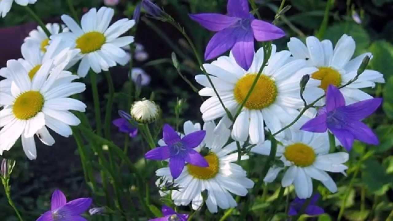 Полевые цветы - YouTube