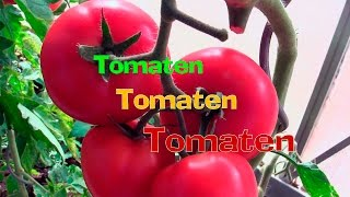 Tomaten Tomaten Tomaten!  Und das geht so:    Film 41