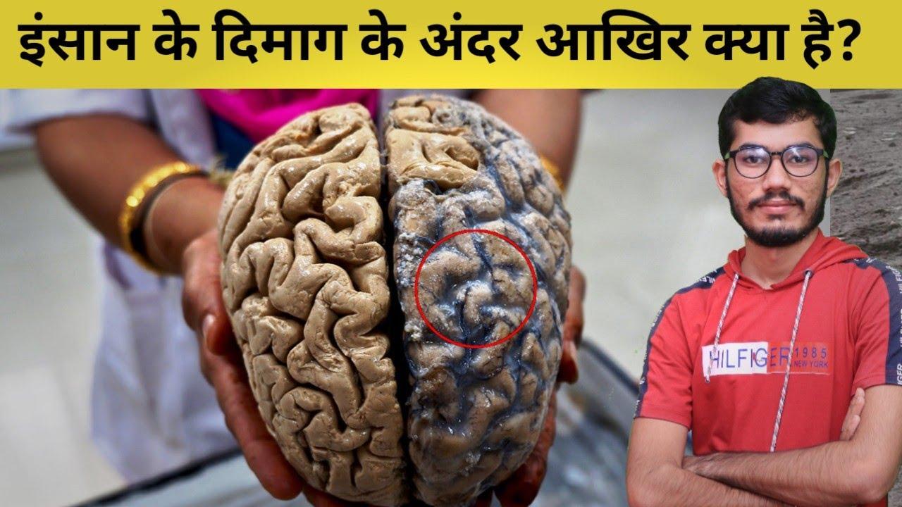 इंसान का दिमाग आखिर  डाटा को कैसे याद करता है? चलिए दिमाग की एक लंबी यात्रा की और!