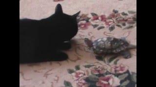 Черепаха гоняет кота и выносит мне мозг.Кусает струю и плохо ест))